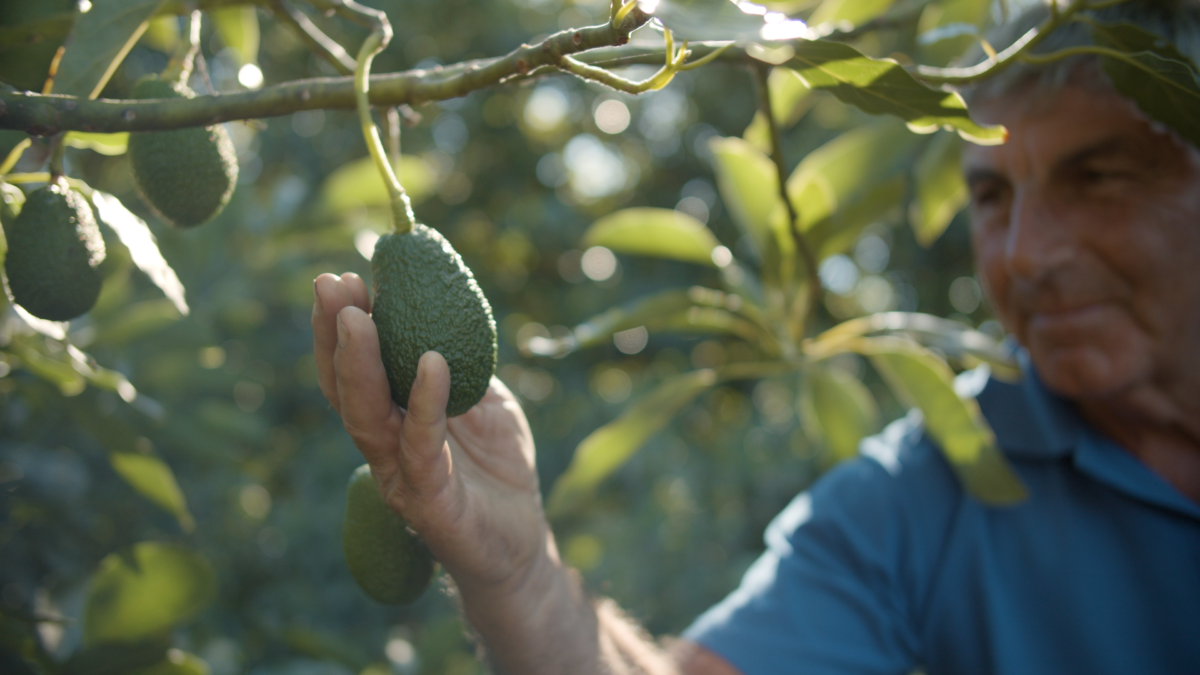 Mining and Avos have more in common than you think